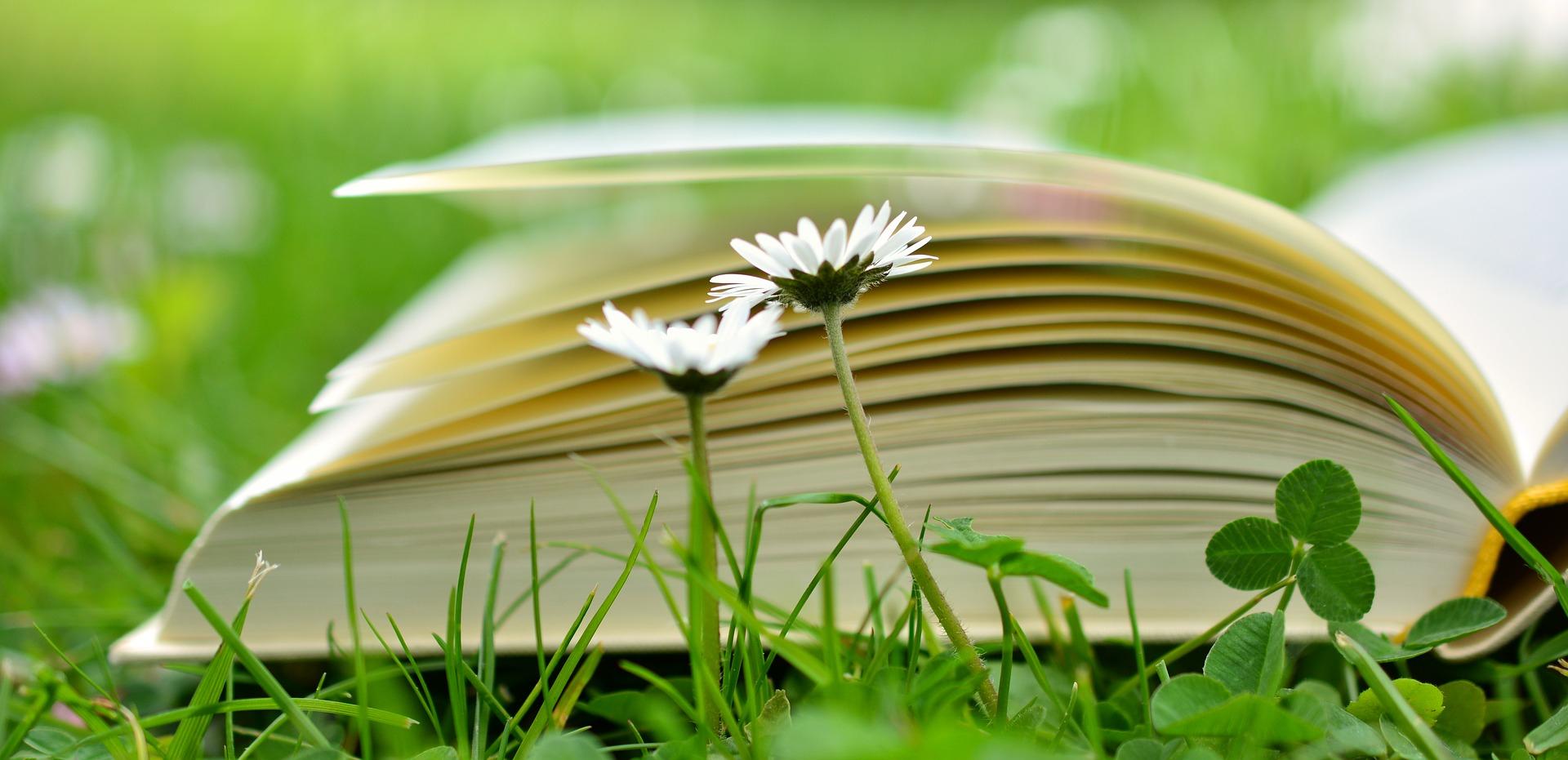 alternatif 100 temel eser, efkan doğan
